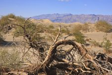 Free Death Valley Stock Photos - 15690573