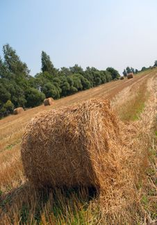 Free Straw Stacks. Stock Photo - 15691790