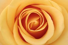 Free Inside Of The Rose Stock Images - 15691854