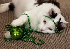 Cat With A New Year S Decorations. Royalty Free Stock Photo