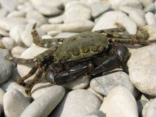 Free Crab Royalty Free Stock Photo - 15693235