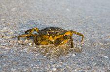 Free Crab On Seaside Royalty Free Stock Photo - 15693695