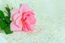 Free One Pink Rose On Lace Royalty Free Stock Photo - 15693775