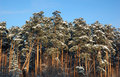Free Winter  Landscape Stock Photos - 1570473