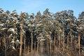 Free Winter  Landscape Royalty Free Stock Image - 1570476