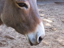 Free DONKEY-HAVEN-GUESSES Stock Images - 1570154