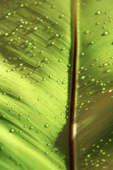Free Drops On Leaf Stock Photography - 1570662