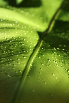 Free Drops On Leaf Stock Photography - 1570672