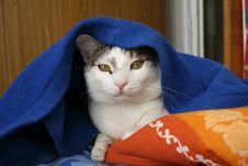 Free Sleepy Cat Royalty Free Stock Photos - 1570798
