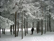 Free Winter Idila Royalty Free Stock Photos - 1571108