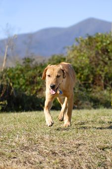 Free Dog In Stride Royalty Free Stock Photos - 1573438