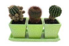 Free Cactus Stock Photography - 1573642