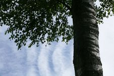 Free Branches In The Sky Royalty Free Stock Photos - 1574198