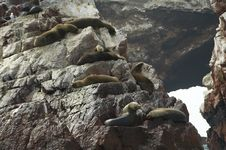 Free Sea Lions Royalty Free Stock Photography - 1574907