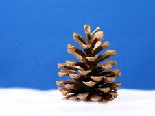 Free Golden Pine Cone Stock Photography - 1576642