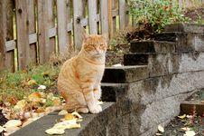 Free Cat On Ledge Royalty Free Stock Images - 1576979