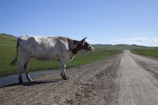 Free Cattle And Road Stock Photos - 15700583