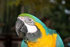 Free Yellow Blue Macaw In Forest Stock Image - 15700591
