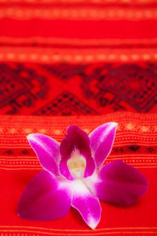 Free White Towel And Orchid Royalty Free Stock Image - 15701026