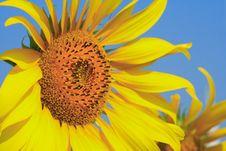 Free Behind The Sun Stock Photos - 15701033