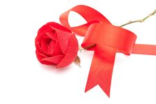 Free Red Rose With Red Ribbon Stock Photography - 15703092