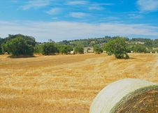 Free Field With Hay Bales Royalty Free Stock Images - 15703129