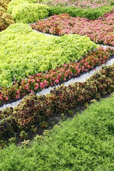 Free Flower Bed; Stock Image - 15703731