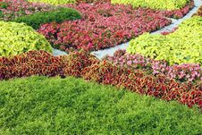 Free Flower Bed Stock Image - 15703771