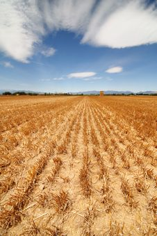 Free Field After Harvest Stock Photos - 15704693