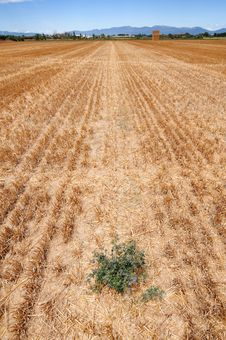 Free Field After Harvest. Royalty Free Stock Image - 15704906