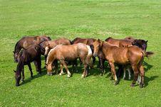 Free Horses Royalty Free Stock Photos - 15705138