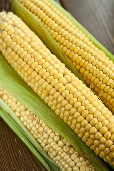 Raw Corn Stock Image