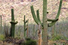 Saguaro National Park, USA Stock Photos