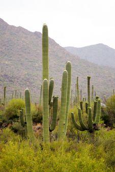 Saguaro National Park, USA Royalty Free Stock Photos