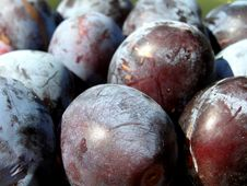 Free Plums Stock Photo - 15708360