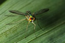 Free High Angle View - Long Legged Fly Stock Image - 15708991