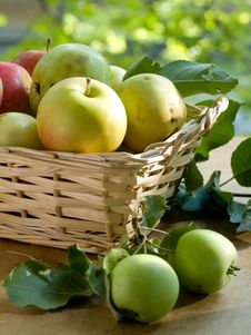 Free Apples Royalty Free Stock Photo - 15709625