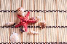 Free Sea Shells Stock Photography - 15709742