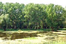 Flooded Forest In Danube Delta