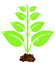 Free Green Plant Stock Image - 15713071