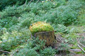 Free Stump Covered With Moss Stock Photos - 15718553
