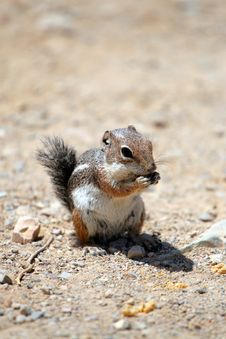 Free Chipmunk Stock Photo - 15710340