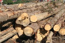 Free Pile Of Wooden Logs Royalty Free Stock Images - 15711109
