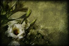 Free Dark Floral Background Royalty Free Stock Image - 15712526
