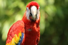 Free Macaw Front Stock Photography - 15712662