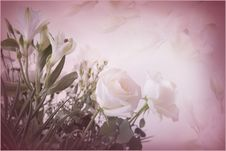 Free Rose Background Stock Photos - 15712983