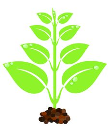 Free Green Plant Stock Image - 15713071