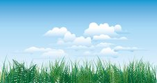 Free Green Grass Royalty Free Stock Photography - 15717087