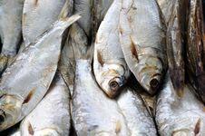 Free Fish Stock Image - 15718011