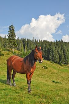 Free Horse On A Hillside. Royalty Free Stock Photos - 15718658